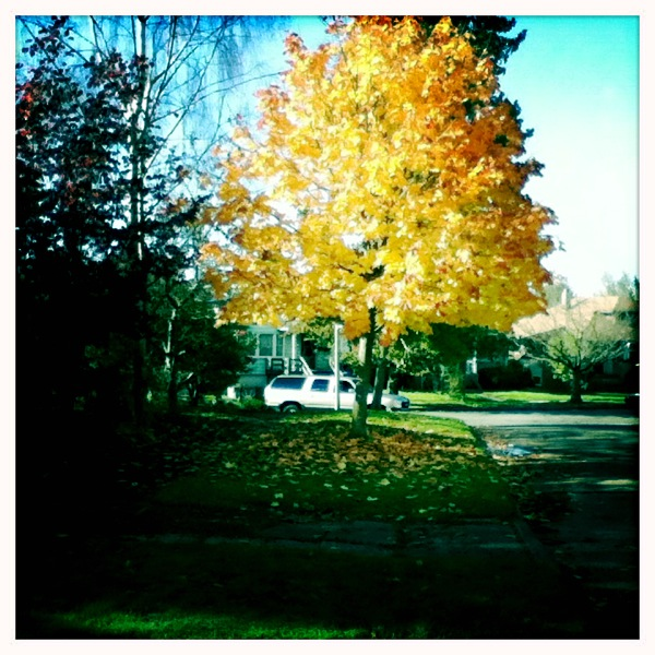 Fall Color w/new iPod Touch 3