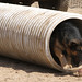 Djibouti Police Academy dedicates K-9 obstacle course
