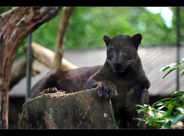 Zoo Taiping 8