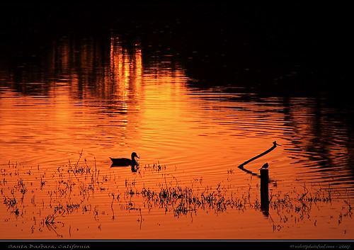 creek sunset bird duck reflection photofool
