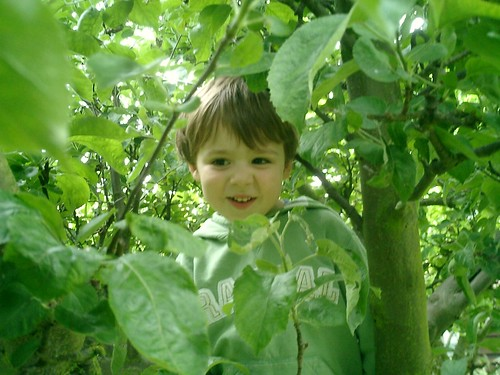 Dre in the apple tree