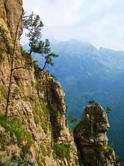 Mountaingoats Galore! - by papanashul