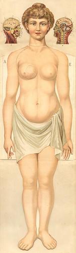 anatomie gmfemm1