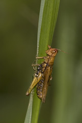 Ant-&-grasshopper (dr ama) Tags: deleteme5 deleteme8 deleteme deleteme2 deleteme3 deleteme4 deleteme6 deleteme9 deleteme7 deleteme10 drama deleteme11