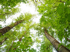 Treeline (Thom Erickson) Tags: trees green rock oregon pen portland island olympus overexposed elk milwaukie ep1 elkrockisland