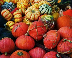 Losing Your Gourd? (Renee Rendler-Kaplan) Tags: autumn fall nature gourds october colorful gbrearview farmersmarket market kodak expression kodakeasyshare evanston gapersblock wbez 2010 chicagoist evanstonfarmersmarket allshapesandsizes evanstonillinois reneerendlerkaplan losingyourgourd