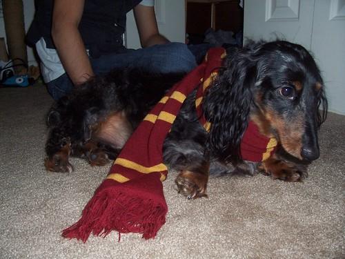 Gryffindor Buddy