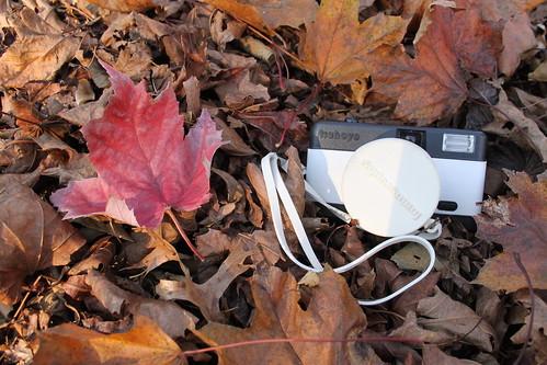 45/52:  lomo fisheye with leaf pile