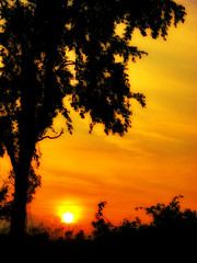 Liquid Gold (Accretion Point) Tags: sunset red sky orange sun black tree grass silhouette yellow clouds bushes coolest wowiekazowie