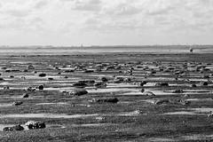 Tideland (vauka) Tags: sea sky bw nature water skyline contrast landscape mud northsea lowtide 32 buoy mudflat wilhelmshaven tideland fotobuch jadebusen wesermarsch sehestedt 0028 fotobuchwesermarsch