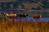 Beautiful Danube 5 (Miodrag mitja Bogdanovic) Tags: park blue green nature water river landscape cow milk europe cows small serbia canyon east national gorge mali gorges danube kazan donau refreshment srbija mitja dunav naturesfinest miodrag bogdanovic djerdap djerdapska klisura worldthroughlens worldthroughlenscom beautifuldanube