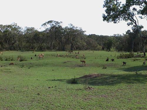 Mara Babbon and Antelope Landscape