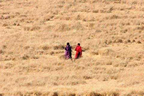 Masai in the NCA savannah