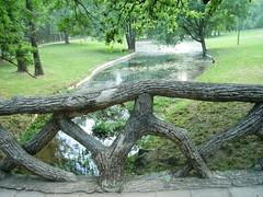 Parcul Nicolae Romanescu (lavy_oly) Tags: tree green parks romania craiova nicolaeromanescu
