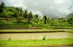 Lombok Countryside (npboy) Tags: indonesia farmer oxen ricefields lombok