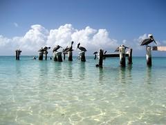 Venezuela, caribbean sea - Los Roques (danieleb80) Tags: beach mare venezuela caribbean animalplanet spiaggia oceano losroques caraibi caribbeansea caribbeanbeach abigfave anawesomeshot aplusphoto istantfave coolestphotographers canoniani caribbeanworld marecaraibico caribbeanland tncdcpitw photoexplore