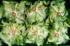 kopfsalat (IHP) Tags: food green yellow salad healthy stem box down vegetable symmetry fresh dressing lettuce greens boxed salat upside wilting nutrition groenemeyer kopfsalat fuer butterhead deinen