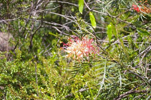 pentax-flower
