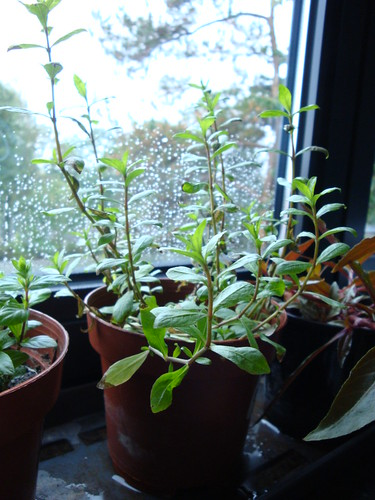 how to keep house plants humid