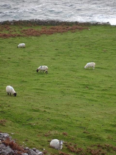 Ireland 2010 169