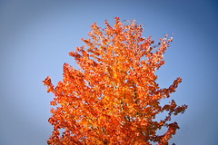 fireball (Raymond Zoellick) Tags: camera blue red sky orange tree leaves digital canon fire rebel leaf fireball