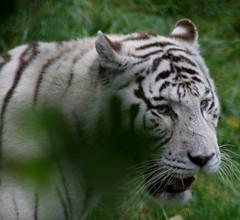 Cerza Safari Park 12 Nov 10 46 (clowesey) Tags: france safari normandy safaripark lisieux cerza parczoologique
