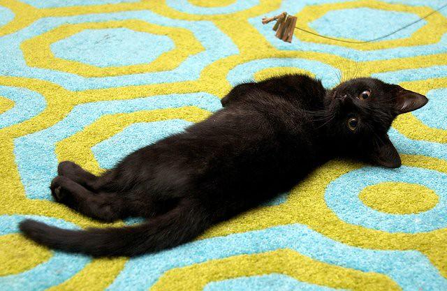 cute rescued black kitten