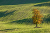 Ever Green (Deeppesteddie) Tags: verde campagna siena valdorcia albero autunno paesaggi radicofani updatecollection ucreleased ystp
