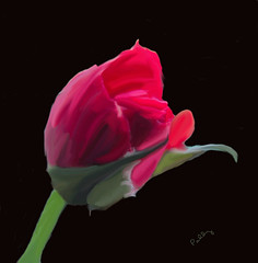 rosesmudge01B (Paddrick) Tags: flower art rose digital painting psp photo flora smudge paintshoppro paddrick