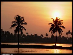 sunrise @ palm country (Naseer Ommer) Tags: kerala backwaters southindia alleppey touristdestinations naseerommer kuutanad