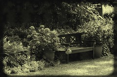 To enjoy (Kirsten M Lentoft) Tags: flowers bw topc25 bench denmark searchthebest momse2600 excellentphotographerawards knuthenborgparksafari kirstenmlentoft