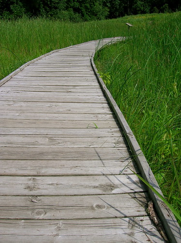 Wetlands Path 2