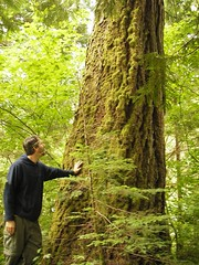 Campsite Giant (LeeLeFever) Tags: camping forest washington northwest cascades northcascades skagitriver