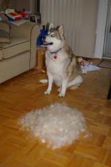 My dog sheds...