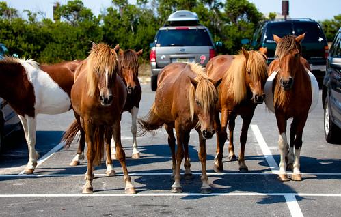 Pony Parking