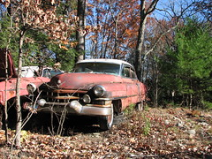 '51 CADILLAC (richie 59) Tags: pink autumn trees cars abandoned overgrown car sedan outside woods junk rust gm rusty headlights upstateny cadillac grill faded chrome rusted upstatenewyork cadillacs newyorkstate headlight junkyard oldcar oldcars rustycar obsolete 2010 wornout nystate rustycars rustyoldcars redcar rustyoldcar americancars frontend abandonedcar junkyards grills saugerties manorville americancar motorvehicles fadedpaint ulstercounty redcars abandonedcars junkcar 4door junkcars uscar uscars midhudsonvalley 1950scar 1950scars fourdoor ulstercountyny saugertiesny 4doorsedan oldcadillac gmcar gmcars americansedan cadillacsedan 1951cadillac oldcadillacs rustycadillac oldsedan manorvilleny richie59 nov2010 nov22010