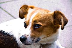 Lieschen (Querulant) Tags: dog pet pets adorable lieschen