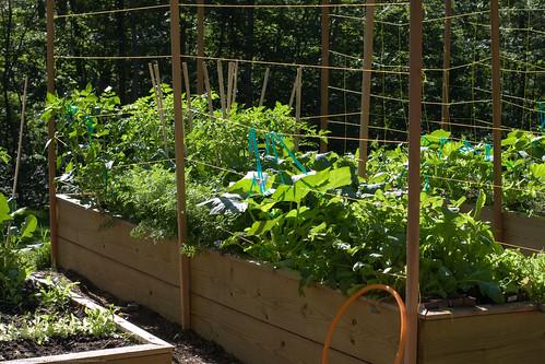Garden Project: abundance