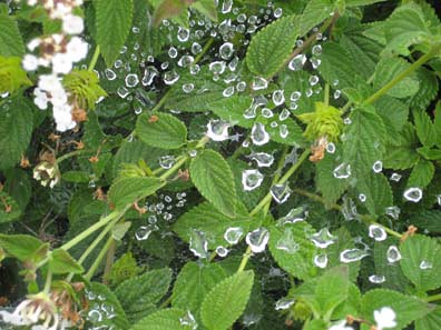 Dew Drops on Spiderwebs