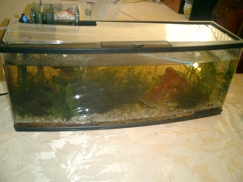Small fish tank heaters tank heaters best propane heaters for Best fish tank heater