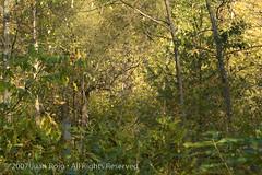 DSC_5771.jpg (JRDesign1) Tags: nikon d70nikon d80glendon forestsunnybrooktoronto