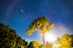 Starz (David Parks - davidparksphotography.com) Tags: sky david tree oklahoma night painting stars lights star nikon long exposure parks trails universe speedlight edmond d700
