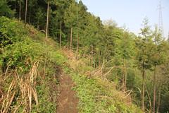 御前山の登り路