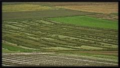 Blés après  l'orage (Sauvageone) Tags: country champs crop campagne orage romandie blés champvent