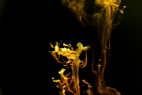 Liquid fire 11 -- water liquid abstract art fluid smoke project fire ghostly effect flow utatan
