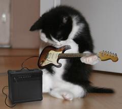 kittyrock