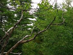 P1030345.jpg (airwaves1) Tags: 1000islands stlawrenceriver july282007 yeoisland