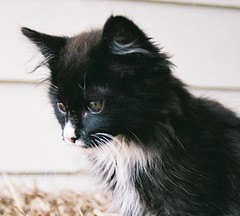 Salem (Larah McElroy) Tags: pictures cats cat photography photo kitten feline picture kitty kittens kitties felines mcelroy larah larahs larah88 larahmcelroy larahsphotography