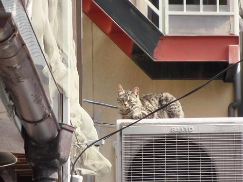 Today's Cat@2010-5-12