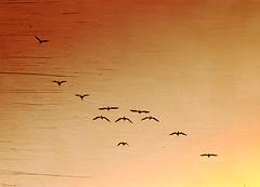 Let your mind flow! (M@@nʎ) Tags: autumn bird texture colors birds dedication flow freedom fly flying october peace iran pentax dream shades minimal fluid gradient iranian conceptual ایران minimalistic 2010 gradients rumi molana k100d مولانا mowlavi مولوی pentaxart